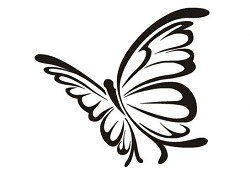 6. Farbenprächtige Schmetterlinge