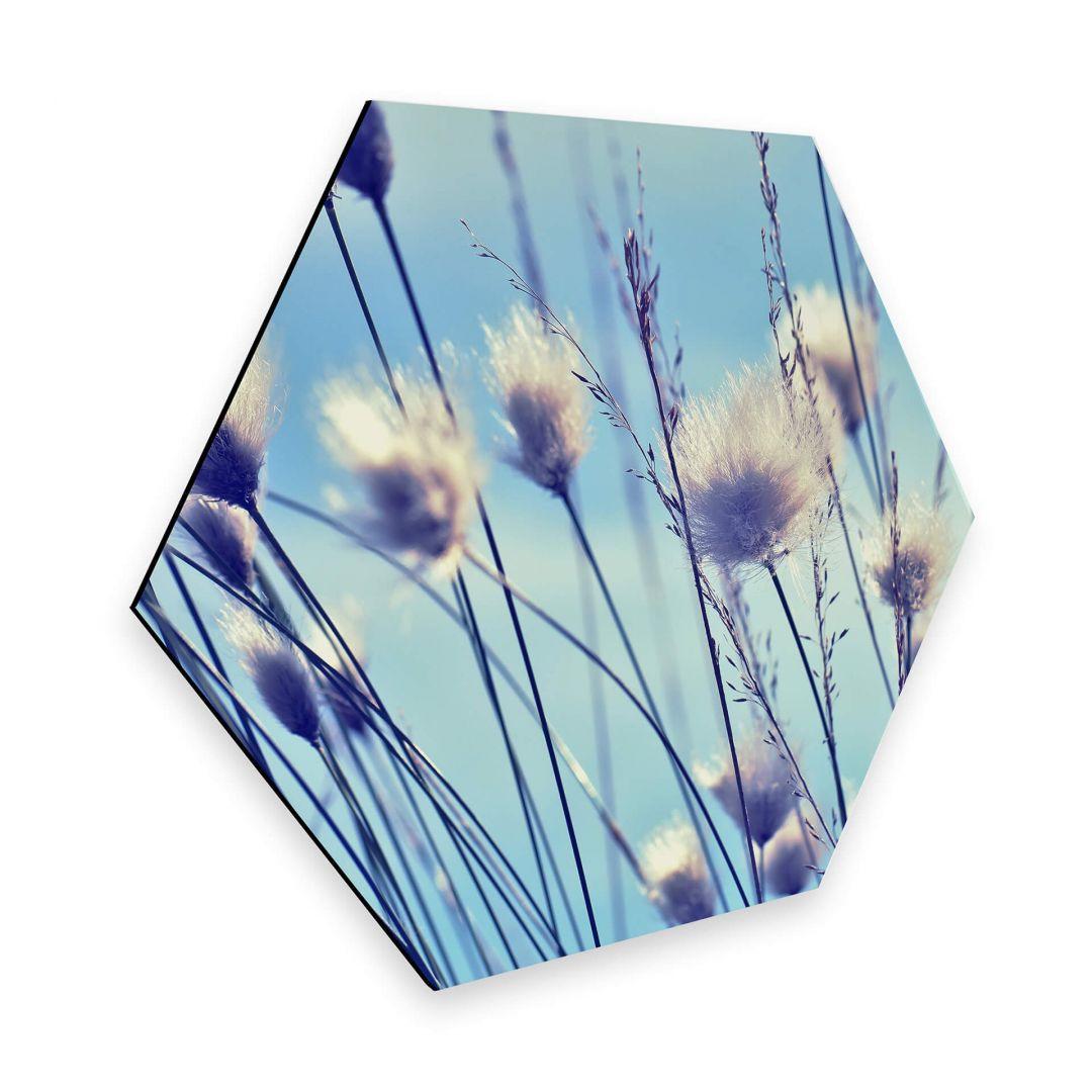 Hexagon - Alu-Dibond Delgado - Wind im Gras - WA272642