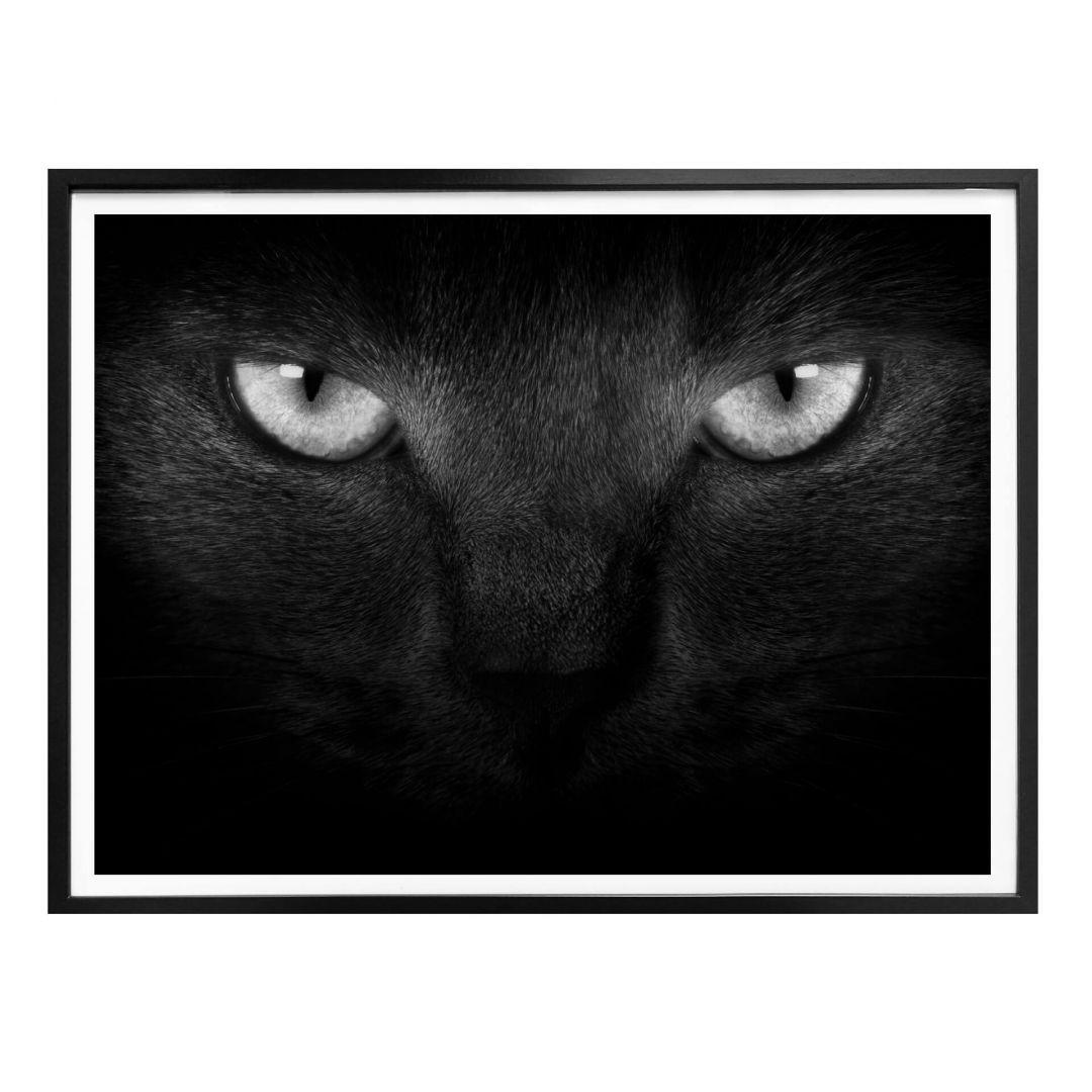 Poster Katzenaugen - schwarz/weiss - WA258282