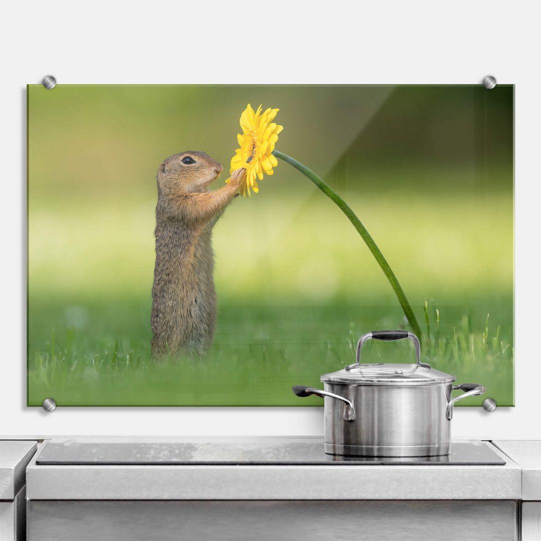 Spritzschutz van Duijn - Erdhörnchen hält Blume - WA283592