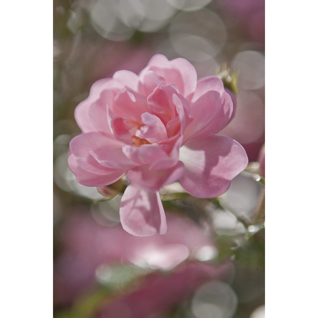 Papiertapete Bouquet - KO4-713