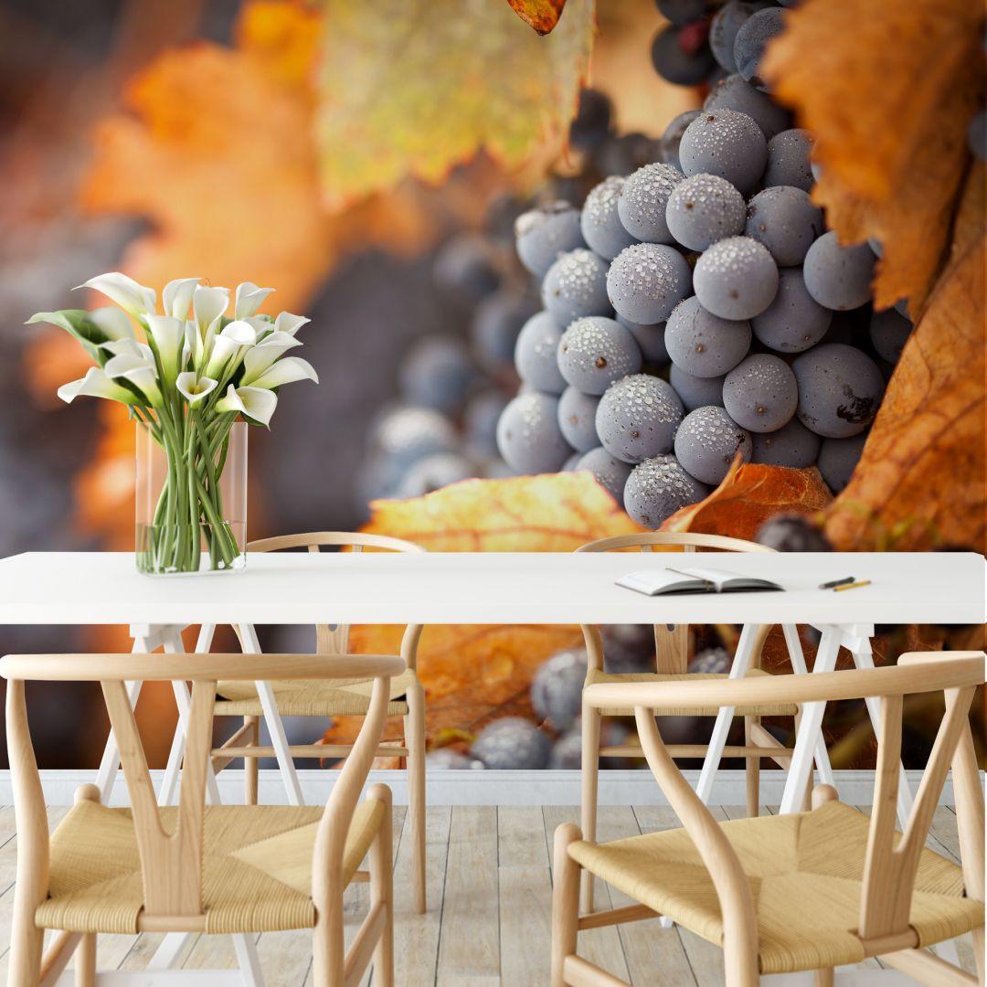Fototapete Wein im Herbst - 336x260cm - WA227771