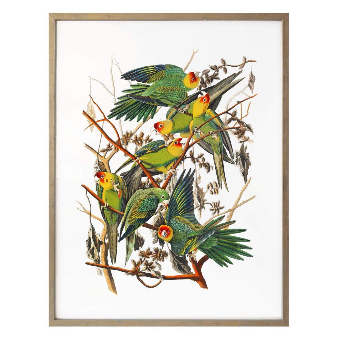 Poster Papageien - WA258754
