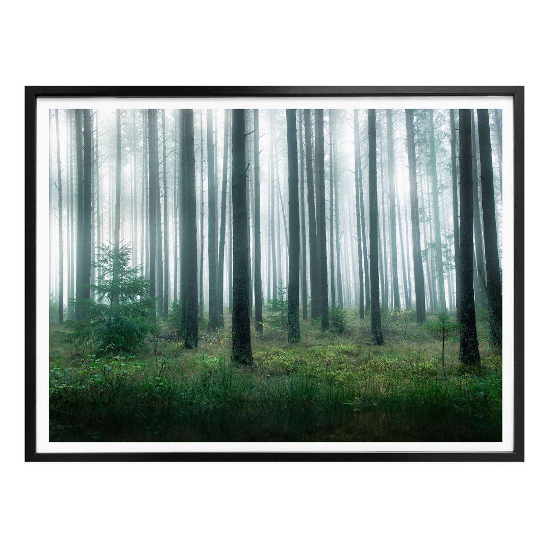 Poster Lindsten - Im Wald - WA281547