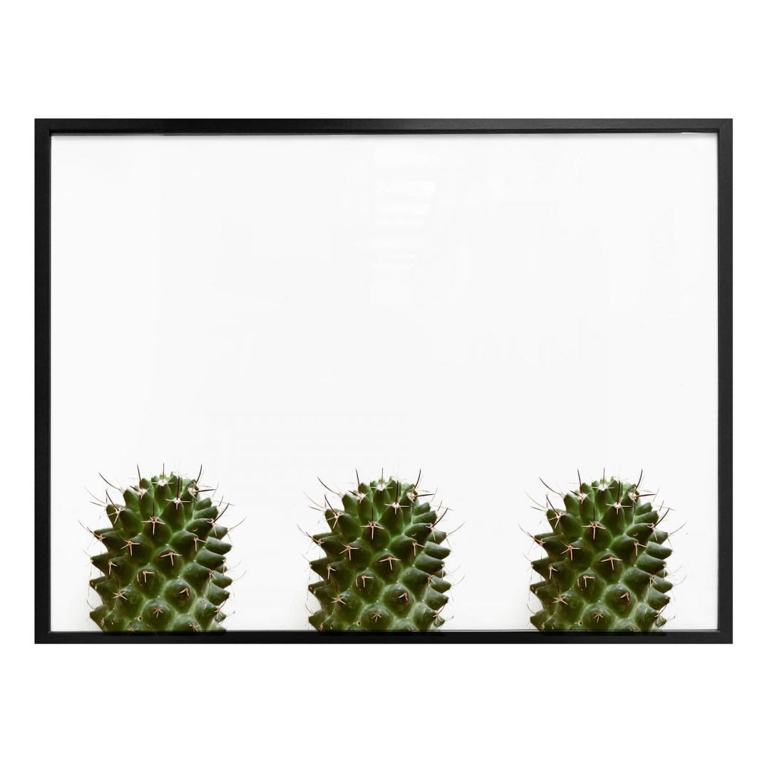 Poster Mein kleiner Kaktus - Trio - WA258641