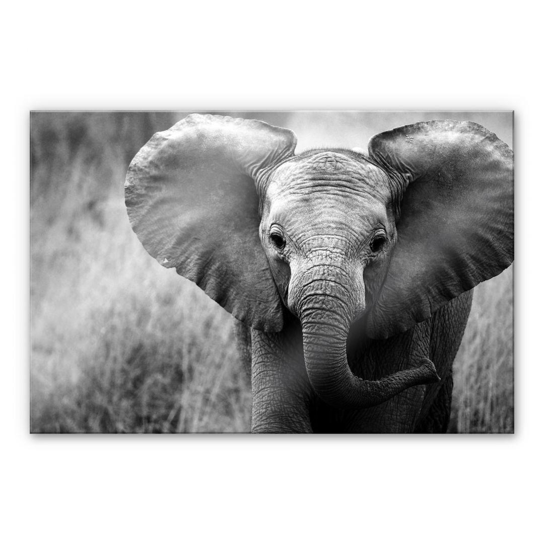 Acrylglasbild Jumbo der kleine Elefant - WA108947