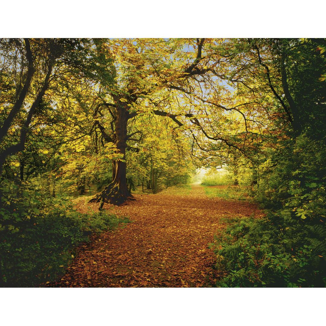 Sonderanfertigung Exklusive Vliestapete Autumn Forest - KO8-068-ONE