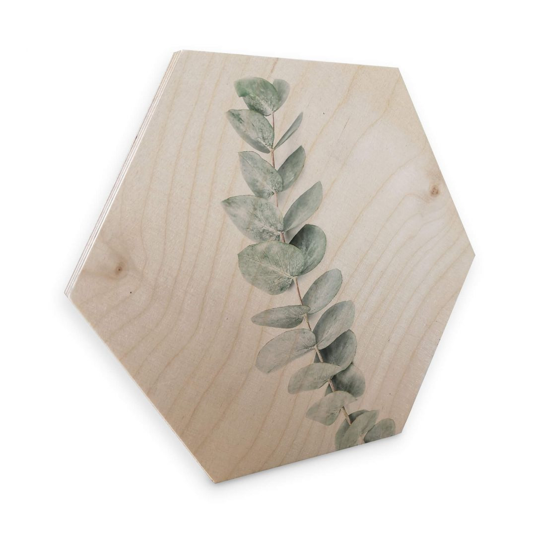Hexagon - Holz Birke-Furnier - Sisi & Seb - Eukalyptus: Ein Zweig - WA253372