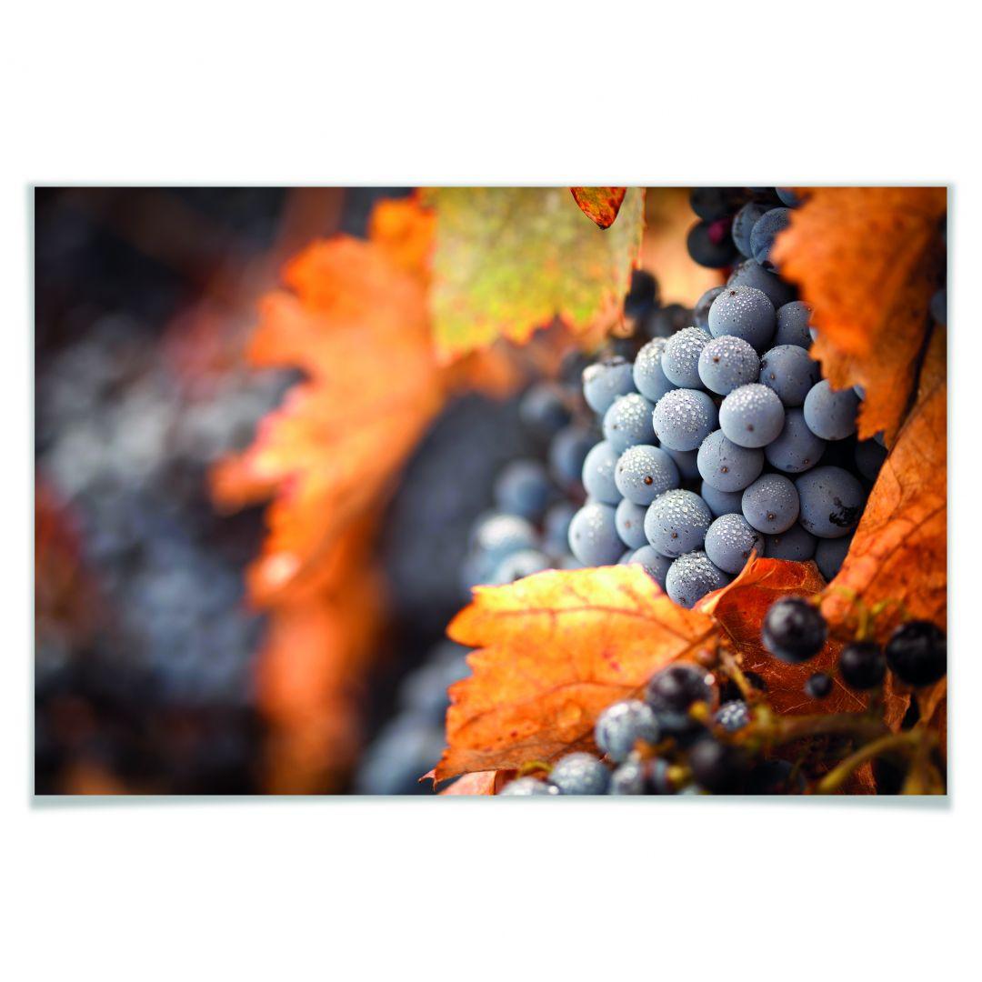 Poster Wein im Herbst - WA168267