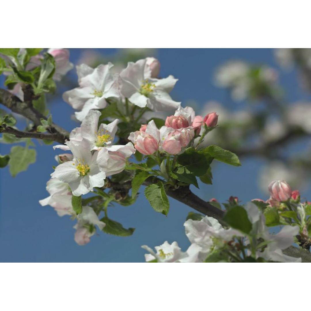 Fototapete Primavera - KO8-735