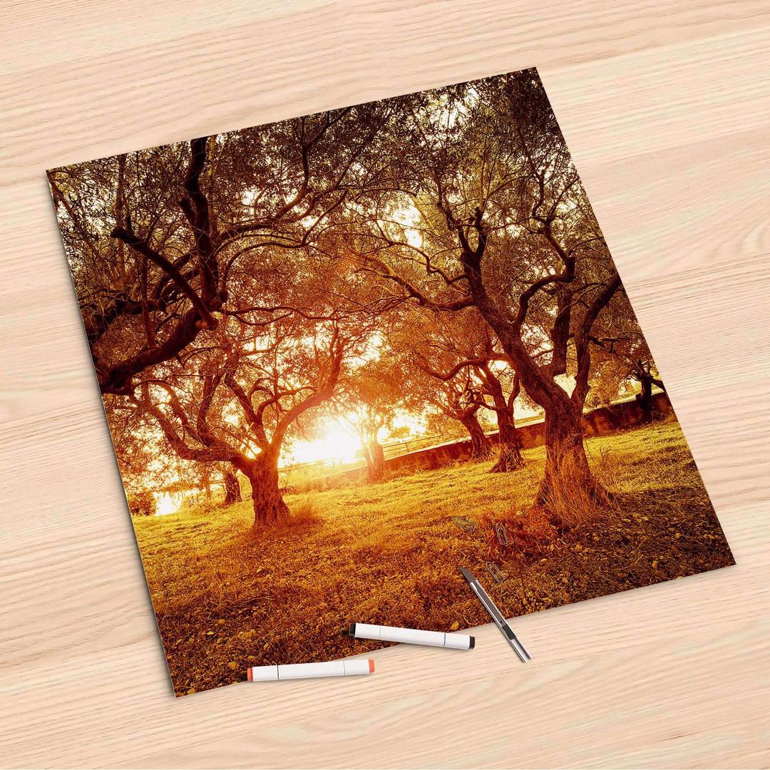 Folienbogen (60x60cm) - Tree Sunlight - CR107221
