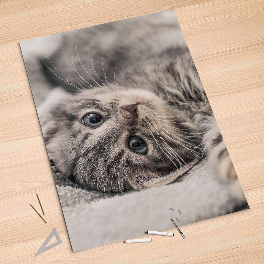 Folienbogen (100x150cm) - Kitty the Cat - CR106207