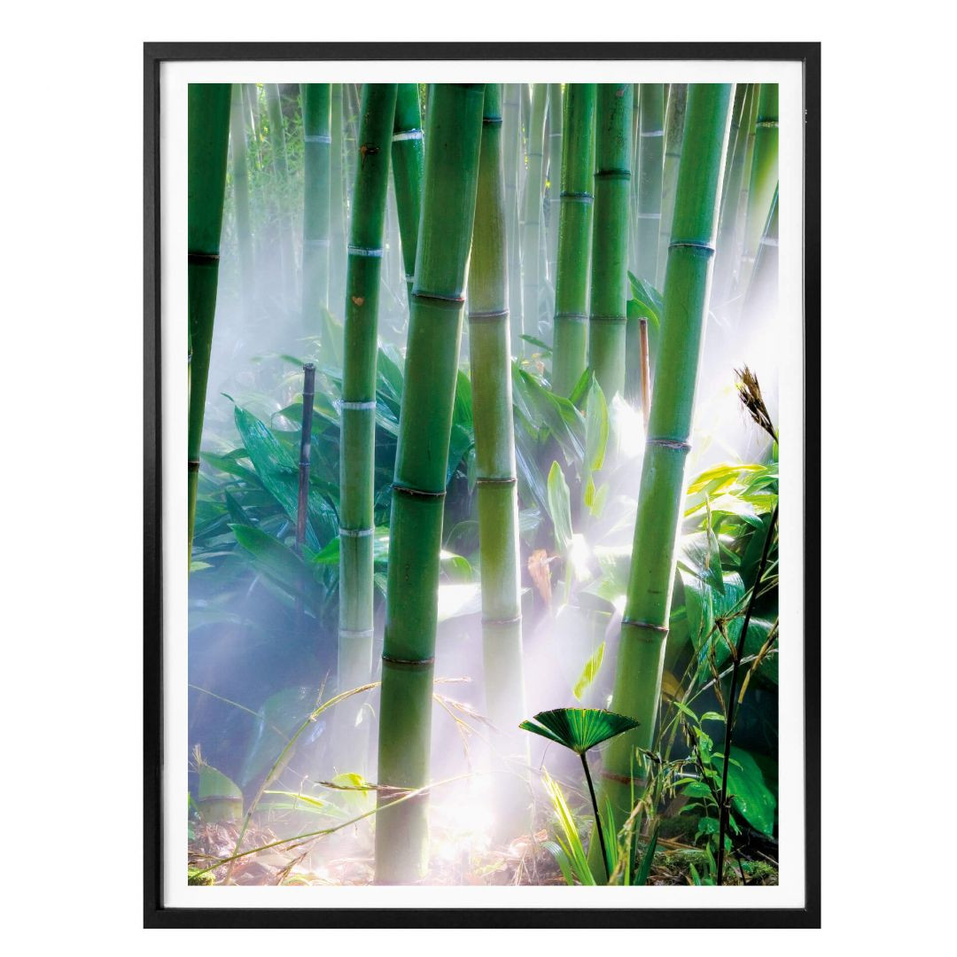 Poster Bamboo Forest - Detail - WA256751