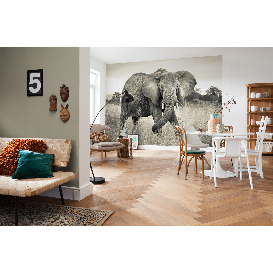 Vliestapete Elephant - KOXXL4-529