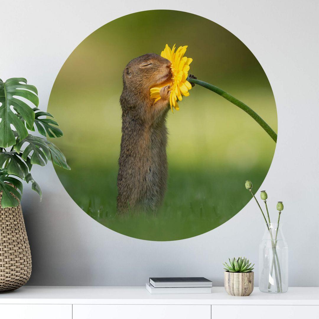 Wandtattoo van Duijn - Erdhörnchen riecht an Blume - Rund - WA284115