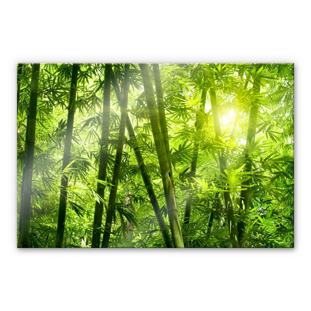 Kuchenruckwand Sonnenschein Im Bambuswald Trenddeko Ch