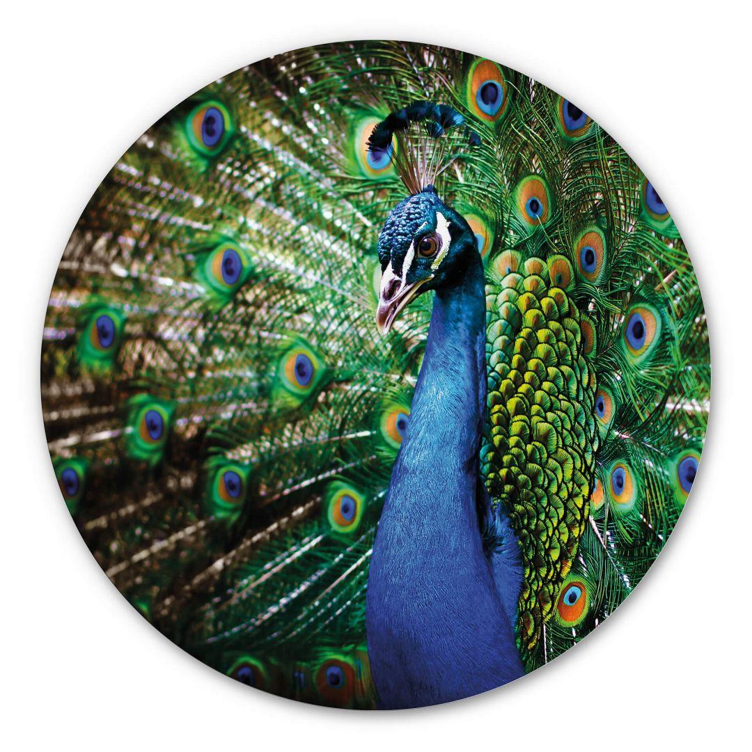 Alu-Dibond - Beautiful Peacock - Rund - WA288486