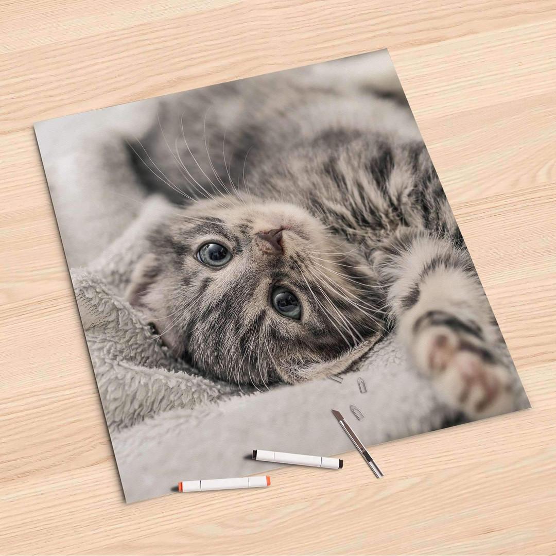 Folienbogen (60x60cm) - Kitty the Cat - CR107116