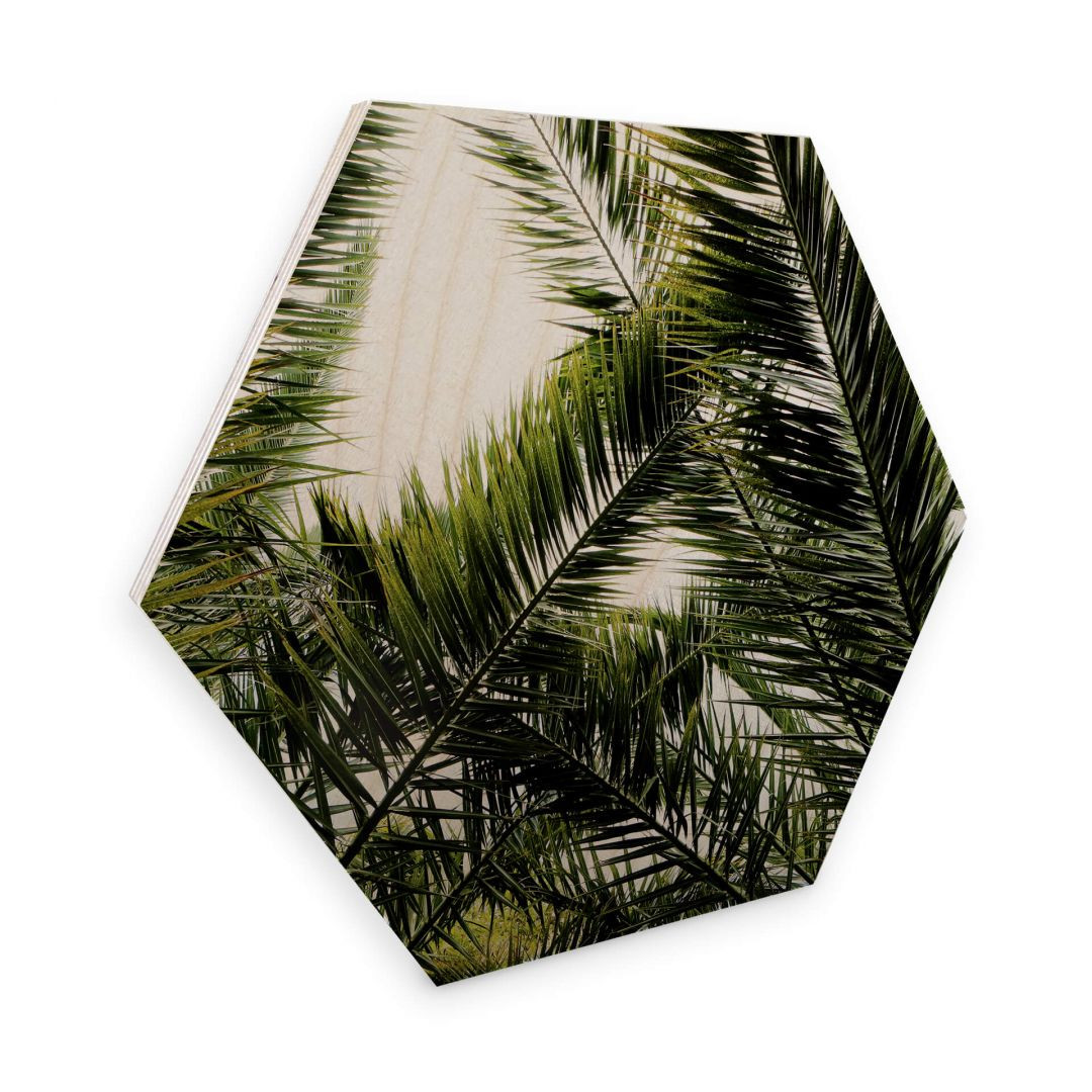 Hexagon - Holz Birke-Furnier - Dattelpalme - WA253153