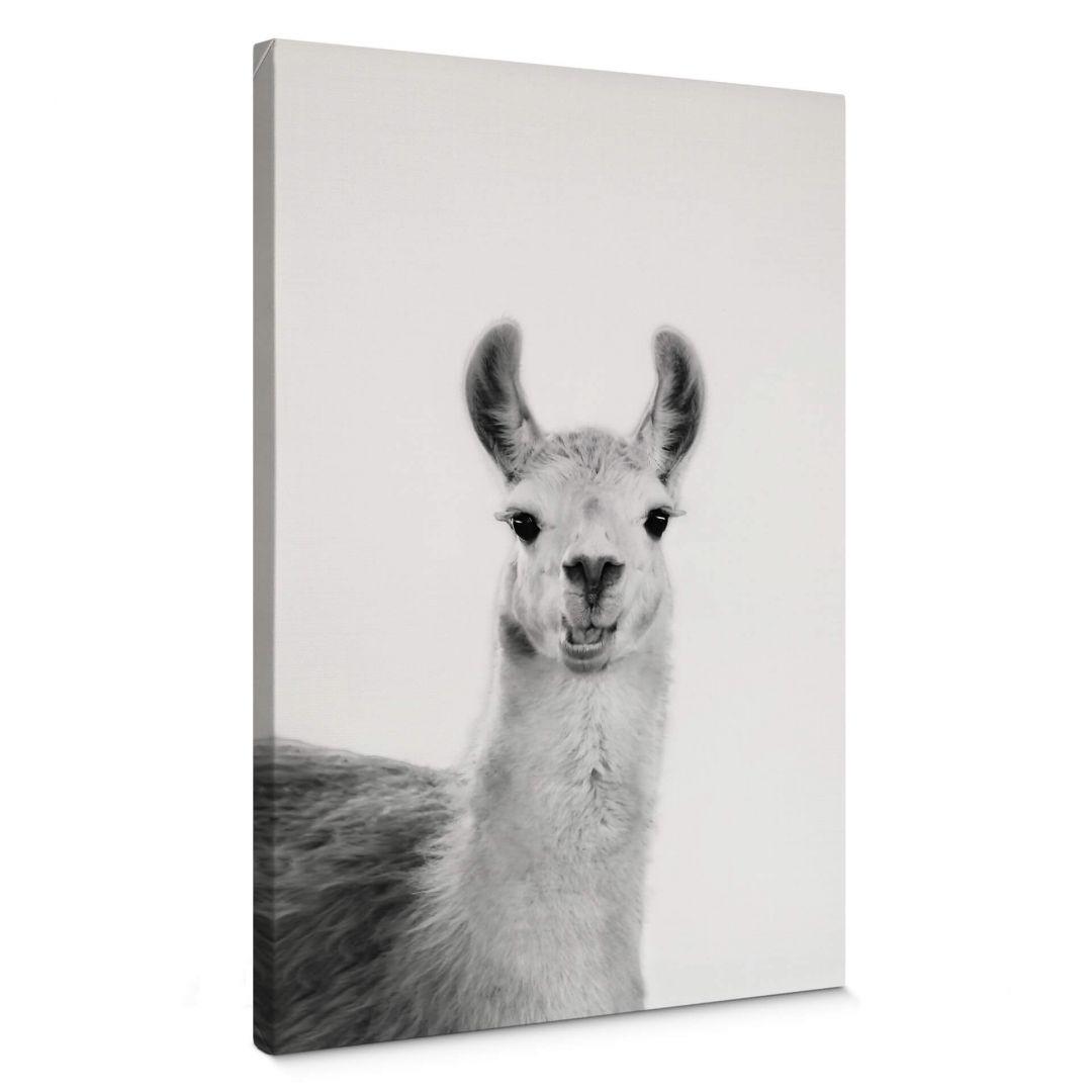 Leinwandbild Sisi & Seb - Happy Lama - WA254748