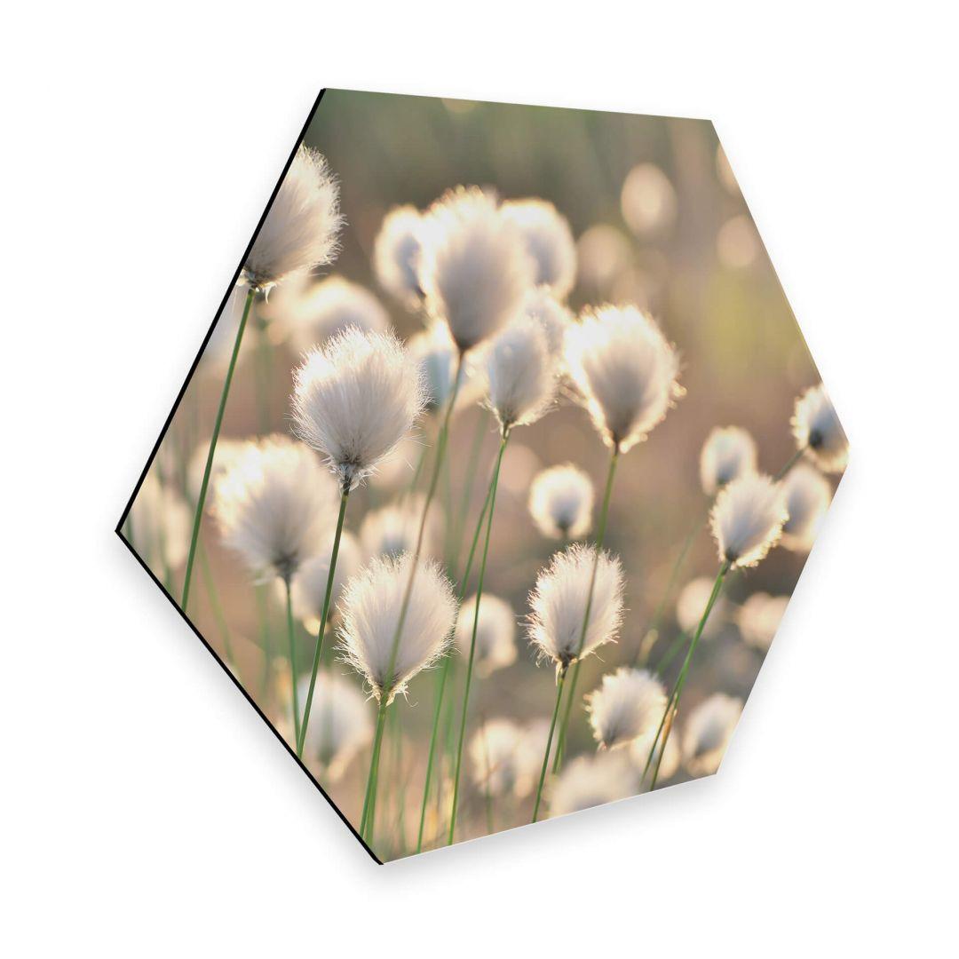 Hexagon - Alu-Dibond Delgado - Wiesenzauber - WA272630