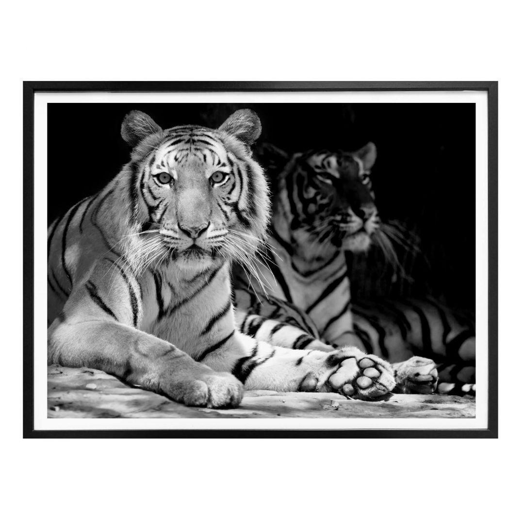 Poster Zwei Königstiger - schwarz/weiss - WA259239