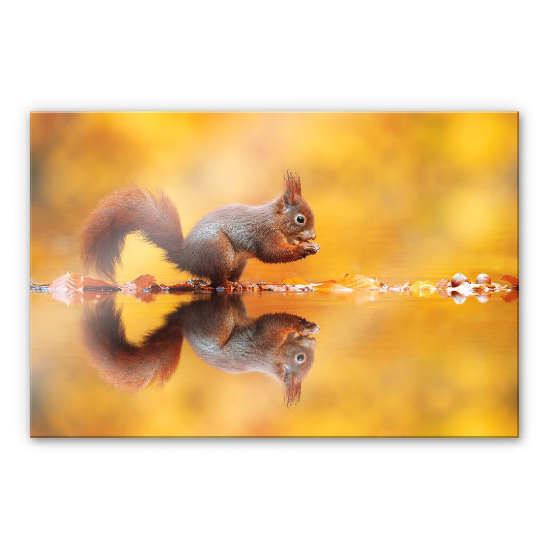acrylglasbild van duijn  eichhörnchen mit nuss  trenddekoch