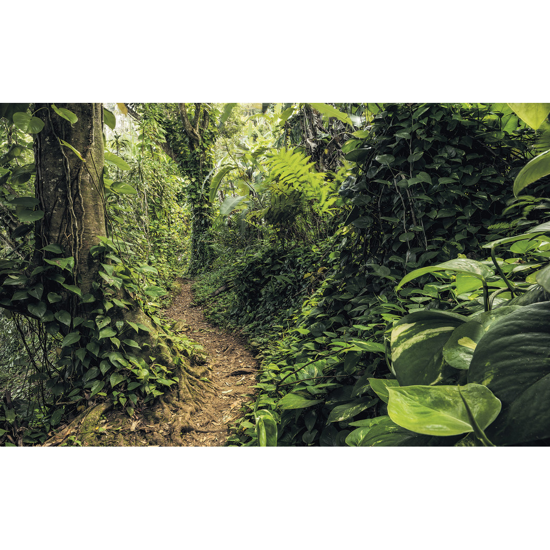 Sonderanfertigung Exklusive Vliestapete Path of Dreams - KOSH072-VD4-ONE