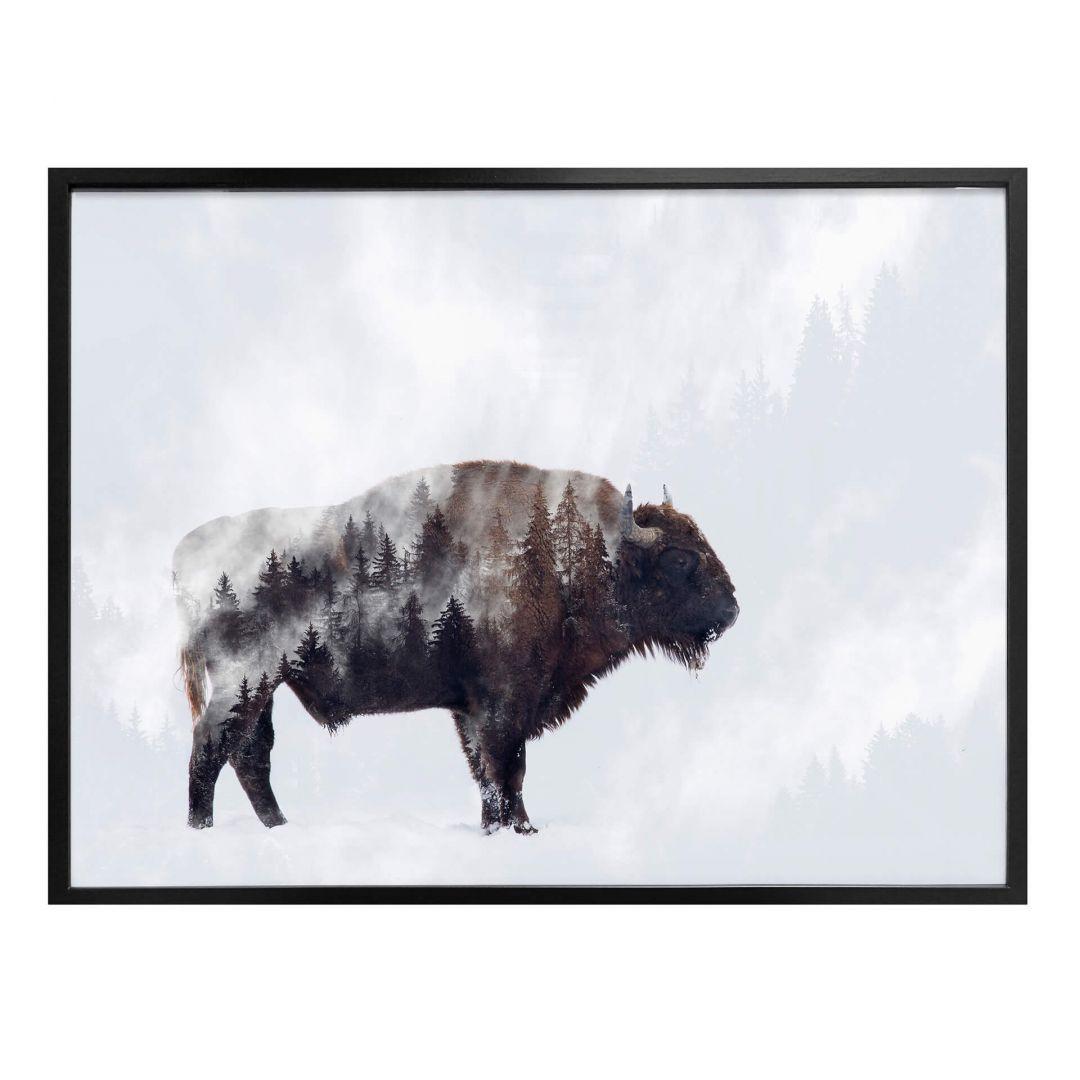 Poster Beáta - Der Bison - WA256862