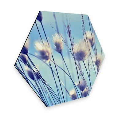 Hexagon - Alu-Dibond Delgado - Wind im Gras
