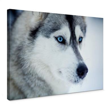 Leinwandbild Eisblaue Augen