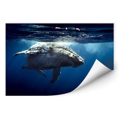 Wallprint Buckelwal auf Tauchgang
