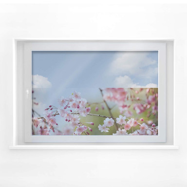 Fensterbild Cherry Blossoms