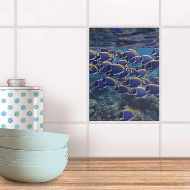 Fliesensticker - Fish swarm