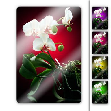 Glasbild Blütenpracht einer Orchidee