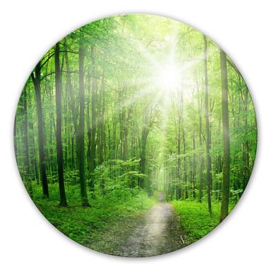 Glasbild Sunny forest - rund