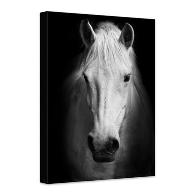 Leinwandbild White Horse