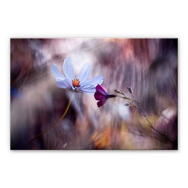 Acrylglasbild Bravin - Rendezvous zweier Blumen
