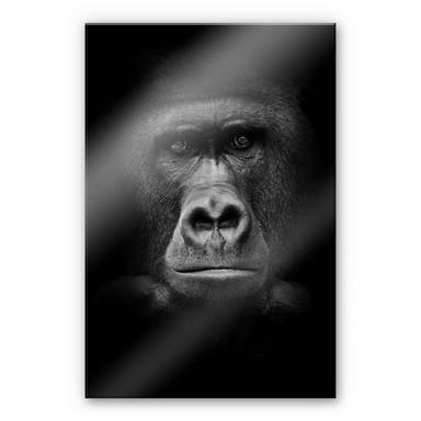 Acrylglasbild Gorilla