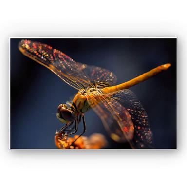 Hartschaumbild Dufour - Libelle auf Tuchfühlung