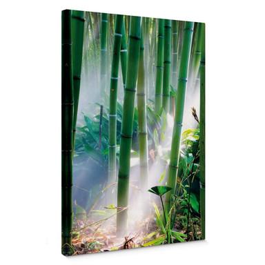 Leinwandbild Bamboo Forest