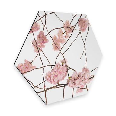 Hexagon - Alu-Dibond Kadam - Flora Japanische Kirschblüte