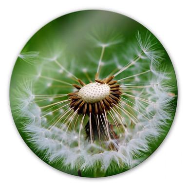 Glasbild Pusteblume im Wind - rund