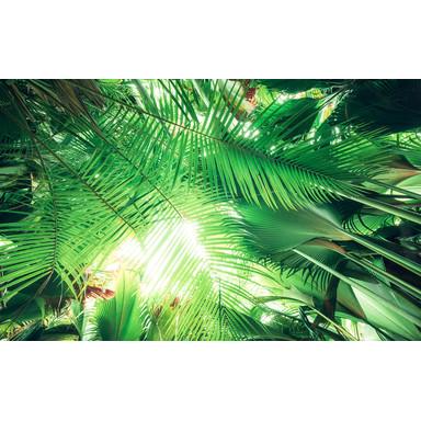 Fototapete Dschungeldach