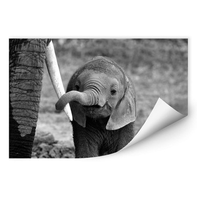 Wallprint Alicke - Close to Mum