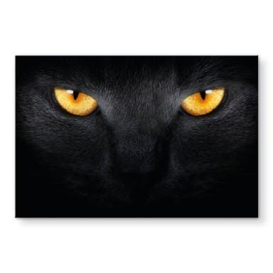 Acrylglasbild Katzenaugen