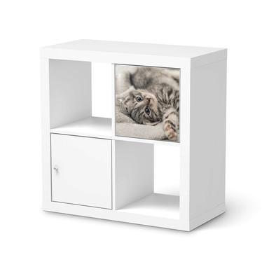 Möbelfolie IKEA Kallax Regal 1 Türe - Kitty the Cat