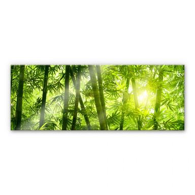 Acrylglasbild Sonnenschein im Bambuswald - Panorama