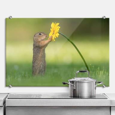 Spritzschutz van Duijn - Erdhörnchen hält Blume
