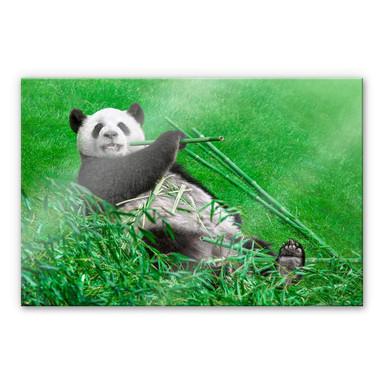 Acrylglasbild Ben Heine - Glücklicher Panda